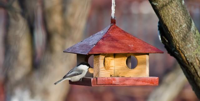 Trucs faciles pour laver vos équipements extérieurs pour oiseaux