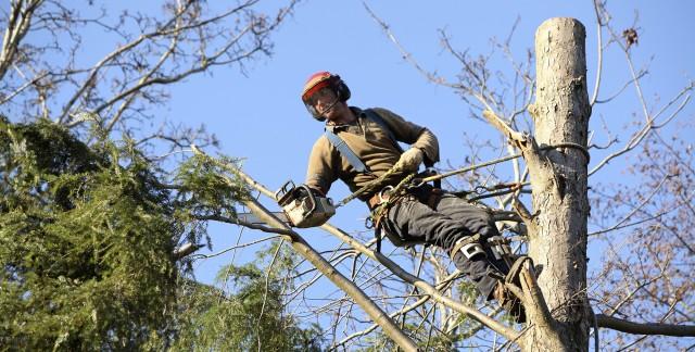 Où trouver un bon arboriculteur?