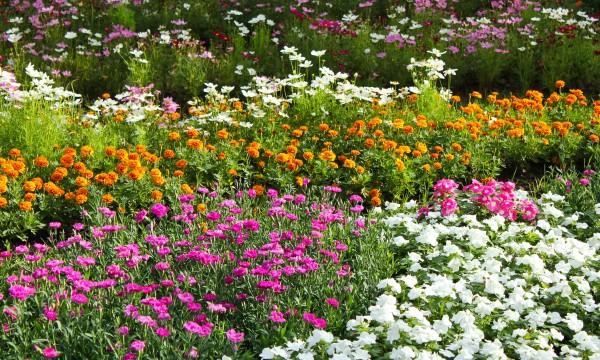 4 conseils pour conomiser sur les plantes trucs pratiques for Conseil sur les plantes