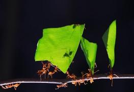 10 fa ons de s occuper des fourmis dans un jardin trucs pratiques. Black Bedroom Furniture Sets. Home Design Ideas