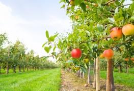 Planter un arbre fruitier: printemps ou automne?