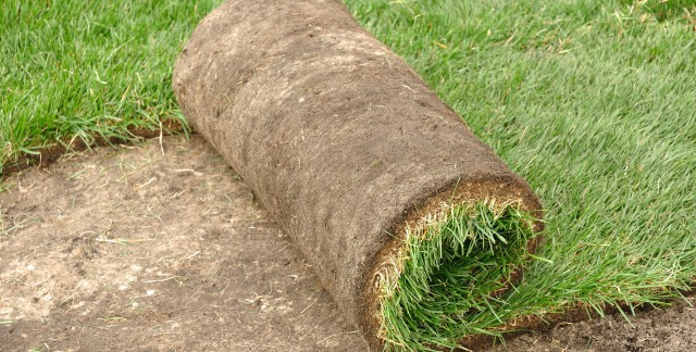 Quelques conseils pour le chaume, le couvre-sol et la pelouse