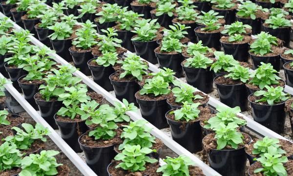 Démarrer des semis à l'intérieur en 5 étapes