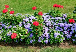 Revigorez votre jardin en plantant desportulacas