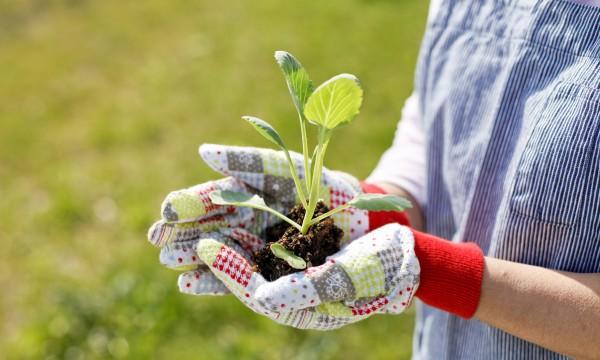 Des moyens s rs pour faire pousser des graines de ricin trucs pratiques - Faire pousser des graines de poivrons ...