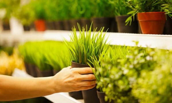 Conseils d 39 experts pour cultiver des plantes en pots - Conseils jardinage pour les plantes en pots ...