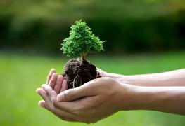 Guide du jardinier : nouveaux arbres