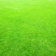 Le guide du propriétaire pour de belles pelouses
