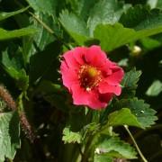 5 trucs futés pour débarrasser votre jardin des nuisibles