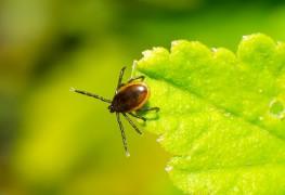 5 questions pour vous aider à comprendre la maladie de Lyme