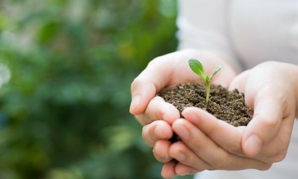 5 tapes pour cr er de nouvelles plantes partir d 39 une for Plante qui pousse
