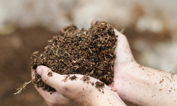 conseils pratiques pour quilibrer le ph du sol de votre jardin trucs pratiques. Black Bedroom Furniture Sets. Home Design Ideas