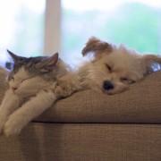 7 conseils pour voyager en paix, avec ou sans votre animal de compagnie