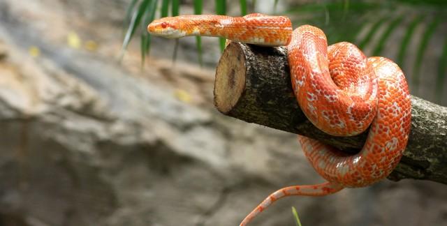 Traiterles morsures de serpents, les piqûres d'araignées et de puces calmement