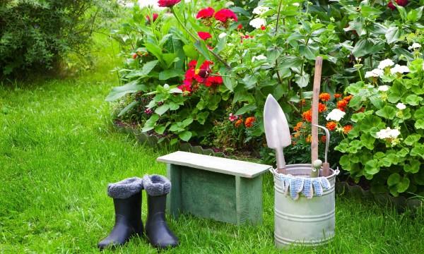Comment prendre soin des plantes annuelles et vivaces tout au long de l 39 ann e trucs pratiques - Plantes vivaces fleuries toute l annee ...