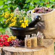 La tanaisie : jardinage et usages divers