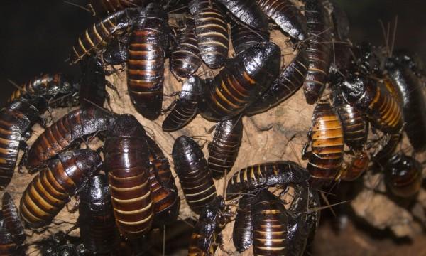 comment attirer les insectes utiles dans votre jardin trucs pratiques. Black Bedroom Furniture Sets. Home Design Ideas