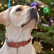 4 façons d'inclure vos animaux de compagnie dans les fêtes de famille à Noël