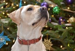 4 moyens d'inclure vos animaux de compagnie dans les fêtes de famille à Noël
