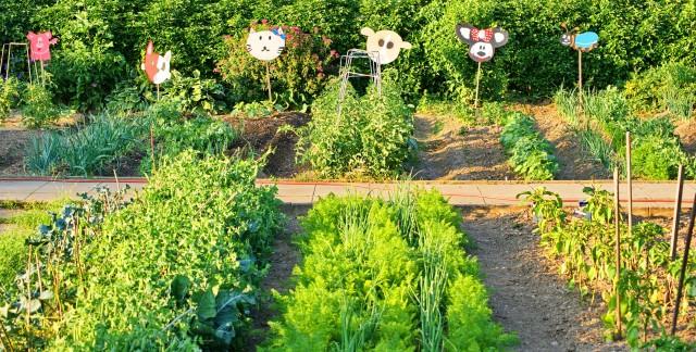 Le compagnonnage, pour un jardin vraiment écolo