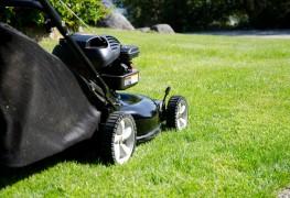 14 problèmes courants de pelouse