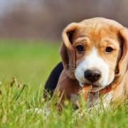 6 trucs intelligents pour promener votre chien
