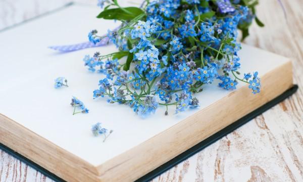 Des annuelles sans souci ajouter une touche de bleu avec les myosotis trucs pratiques - Plantes qui ne craignent pas le gel ...