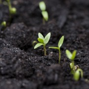 6 façonsde développer votre propre jardin biologique