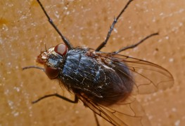 conseils pour se d barrasser des insectes dans sa cuisine trucs pratiques. Black Bedroom Furniture Sets. Home Design Ideas