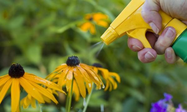 Produits chimiques dans le jardin mode d 39 emploi trucs - Les produits menagers utilises dans le jardin ...