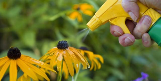 Produits chimiques dans le jardin: mode d'emploi