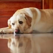 Remèdes maisons pour 4 problèmes de santé courants d'animaux