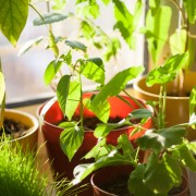 Comment réussir un jardin avec des pots ?