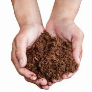 L'art du jardinage : comment utiliser la mousse de sphaigne