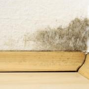 Conseils pour nettoyer un mur de la moisissure