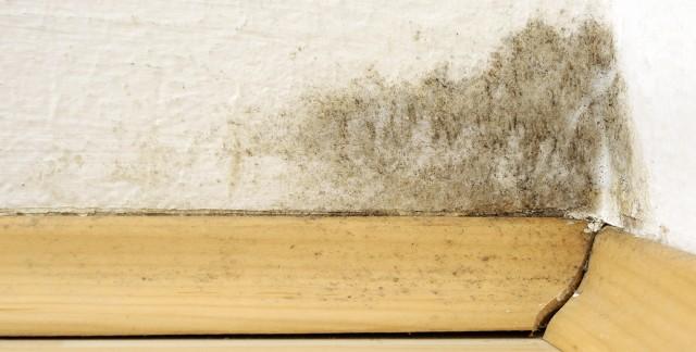 Comment v rifier si l 39 air de votre maison contient de la for Nettoyer la moisissure sur un mur