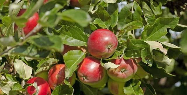 Comment cultiver des fruits biologiques