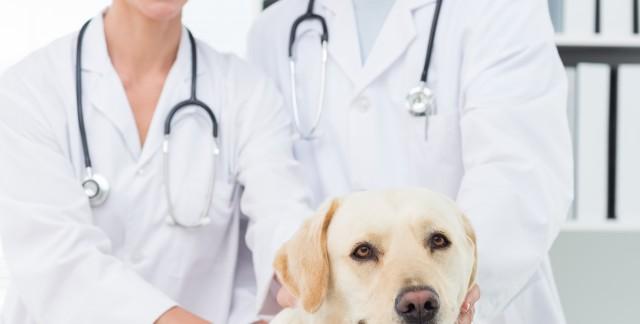 Profitez des conseils d'un vétérinaire par téléphone