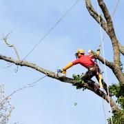 10 raisons d'embaucher un expert pour l'entretien de vos arbres
