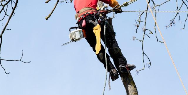 Haubanage: 3 façons de sauver un arbre endommagé