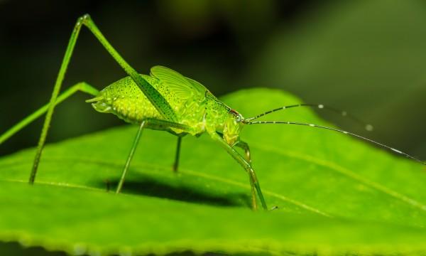 Combattre les insectes du jardin au naturel trucs pratiques - Combattre les moustiques dans le jardin ...