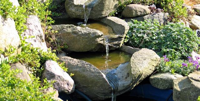 Votre propre jardin d'eau en 8 étapes