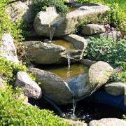 Comment choisir des plantes pour votre jardin d'eau