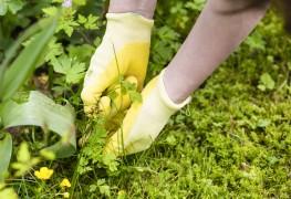 Garder les mauvaises herbes de votre pelouse