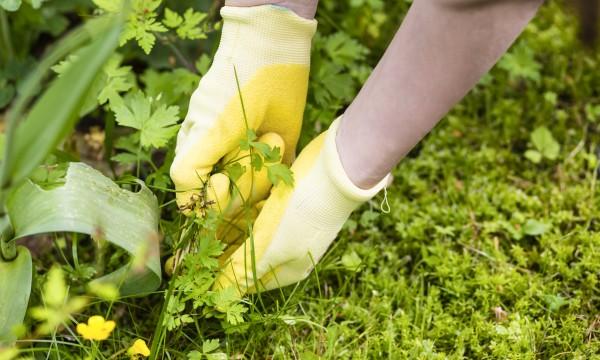 garder les mauvaises herbes de votre pelouse trucs pratiques. Black Bedroom Furniture Sets. Home Design Ideas