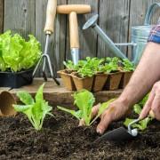 Des méthodessimples pour un jardin peu coûteux