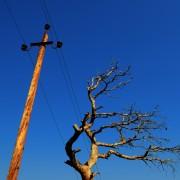 Arbres et lignes électriques : dangers et précautions à prendre