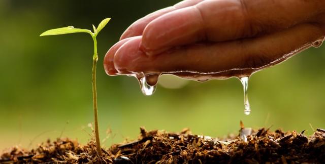 Guide du jardinier: les engrais