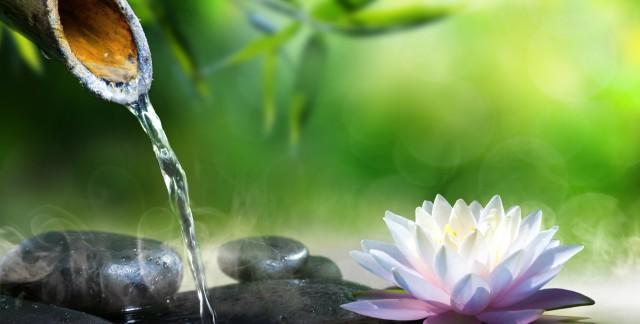 4 étapes pour un merveilleux jardin d'eau