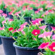 8 conseils utiles pour prendre soin de vos plantes annuelles